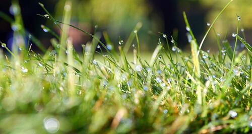avoid mowing wet grass