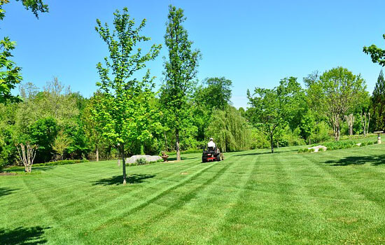 lawn care tips and techniques