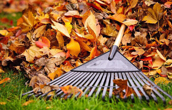 leaf raking tips