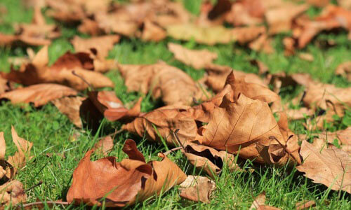leaves on a lawn