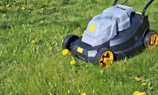 mow the lawn to prevent dandelions