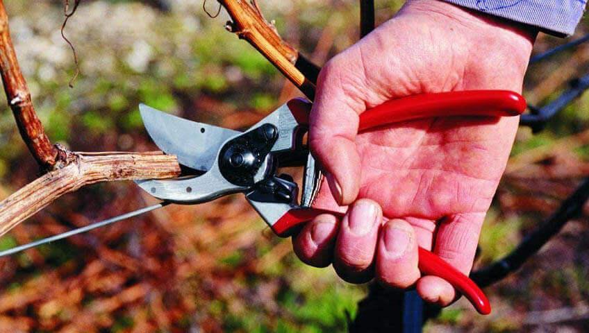 garden pruning shears