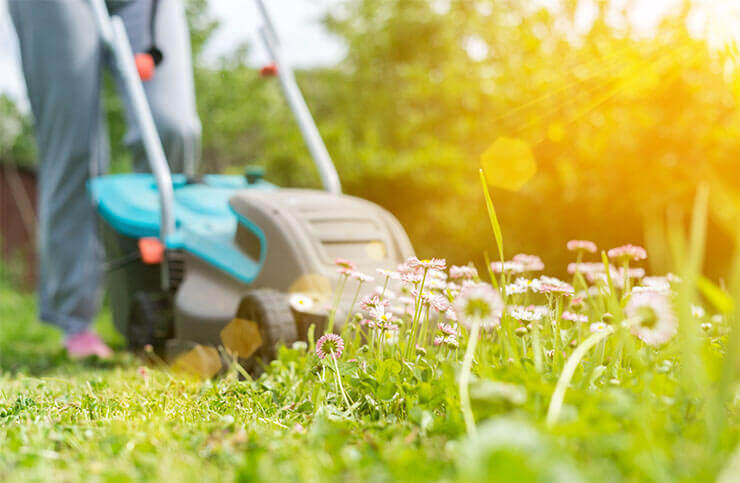 Keep the yard clean and raked