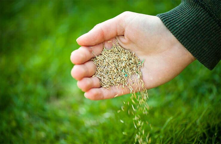 Sprinkle grass seed