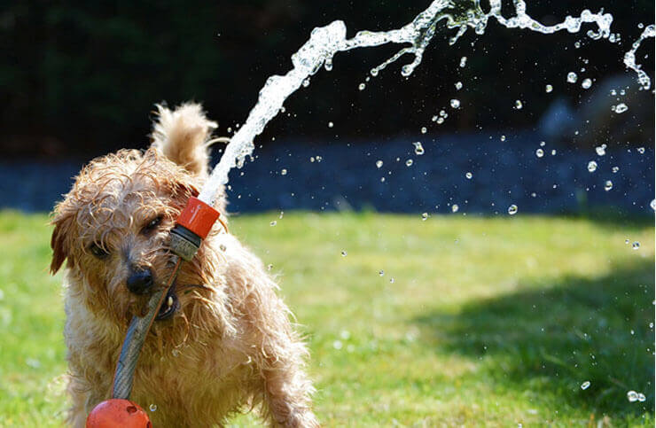 Importance of regular watering