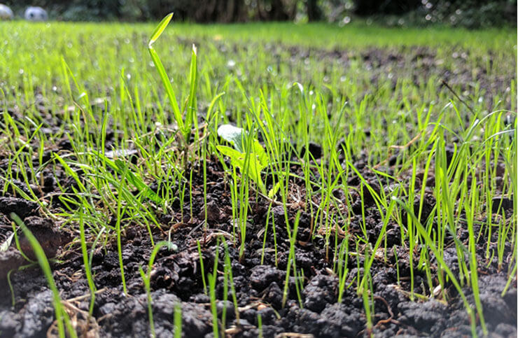 Seed your lawn at the right time of year