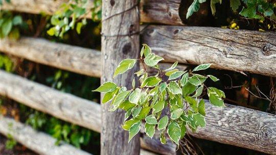Simple DIY garden fence ideas